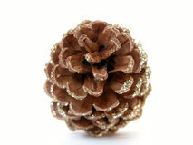 Pine cone. On white ground Royalty Free Stock Photography