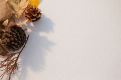 Pine cone and autumn leaves on white background Stock Photos