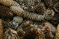 Pine cone background. A shallow-depth-of-field image of pine cones. Focus is in the middle stock photo
