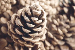 Pine cone background. Pine cone on a blurry background Stock Photo