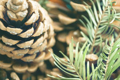 Pine cone background. Pine cone and coniferous branches blurry background Stock Photography