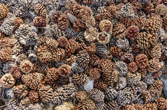 Pine Cone Background Royalty Free Stock Photo