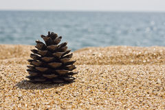 Pine cone on the beach Royalty Free Stock Photos