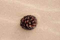Pine cone on beach Stock Photography