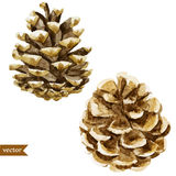 Pine cone stock illustration