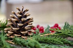 Pine Cone and berries Stock Image