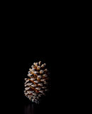 Pine cone on black background christmas decoration Royalty Free Stock Photography