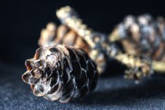 Pine Cone on black background royalty free stock photo