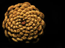 Pine cone on black Stock Images