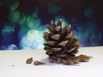 Pine cone with the blue background and white base. Royalty Free Stock Image