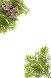 Pine Cone Border. Pine branches and fir cone corners covered in snow on white background Stock Photo