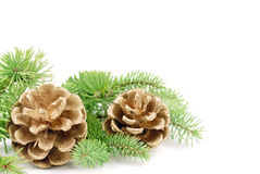 Pine cone with branch Royalty Free Stock Photo