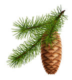 Pine cone with branch. Object on white background royalty free illustration
