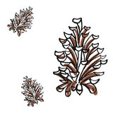 Pine cone and branch of fir tree, isolated on white background. Vector vintage black engraving illustration. Pine cone and branch of fir tree. Isolated on white Royalty Free Stock Photography