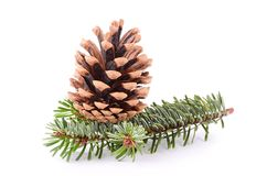 Pine cone and branch isolated on white Royalty Free Stock Photos