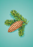 Pine cone with branch Royalty Free Stock Photography