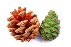 Pine cone, cedar in white background royalty free stock photos
