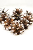 Pine cone Christmas decoration Royalty Free Stock Photo
