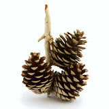 Pine cone, Christmas ornament. Royalty Free Stock Image