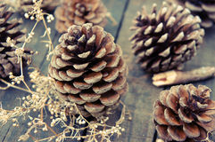 Pine cone, Christmas, pinecone, xmas Royalty Free Stock Photography