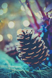 Pine cone Royalty Free Stock Photos