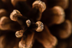 Pine Cone Close up Royalty Free Stock Photography