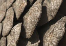 Pine cone, close-up Stock Photos