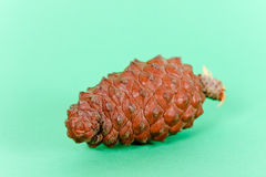 Pine cone closeup on green background Royalty Free Stock Photo
