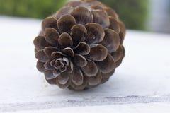 Pine cone Royalty Free Stock Photo