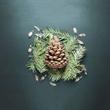 Pine cone composition. Royalty Free Stock Images