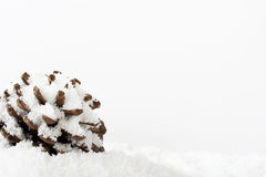 Pine cone covered in white fluffy snow Royalty Free Stock Images