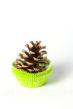 Pine cone in cupcake case. Isolated on white Royalty Free Stock Photography