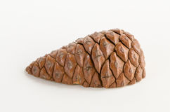 Pine cone. Cut in half Stock Photos