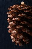 Pine cone on the dark background vertical Royalty Free Stock Image