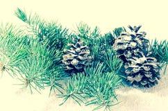 Pine cone decoration Stock Image