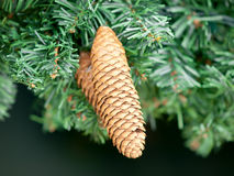 Pine cone detail hanging Stock Photos