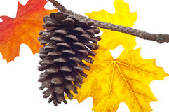 Pine Cone and Fall Leaves Stock Photo