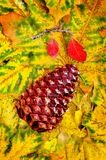 Pine Cone and Fall Leaves Stock Photography