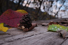 Pine cone, fall leaves and water drops. Colored leaves, a pine cone and water drops on a wooden board Stock Photos