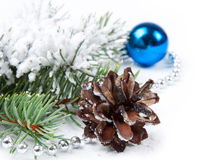 Pine cone  and fir branch Royalty Free Stock Photography