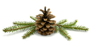 Pine Cone and fir branches Stock Images