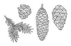 Pine cone and fir tree set. Hand drawn Pine cone and fir tree set. Botanical hand drawn vector illustration. Isolated xmas pinecones. Engraved collection. Great Royalty Free Stock Image