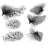 Pine cone and fir tree set. Botanical hand drawn  illustration. Isolated xmas pinecones. Engraved collection Royalty Free Stock Photography