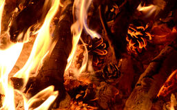 Pine cone on fire Royalty Free Stock Images
