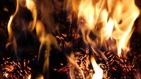 Pine cone in fire, decoration background.  stock video