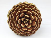 Pine cone front Royalty Free Stock Photo