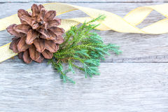 Pine Cone and golden ribbon Royalty Free Stock Image