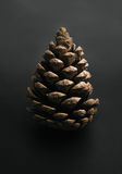 Pine cone on gray. Pine cone on a gray background Royalty Free Stock Photos