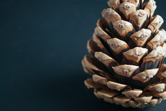 Pine cone on gray. Pine cone on a gray background Royalty Free Stock Photo