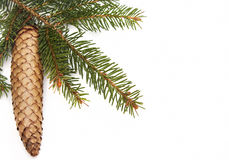 Pine cone and green christmas tree Royalty Free Stock Photo